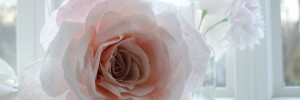 giant_paper_rose-630x210